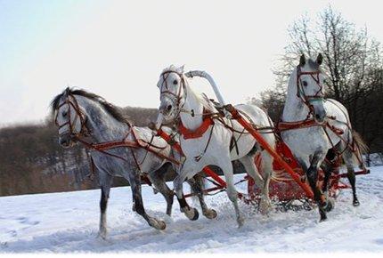 Прогулка на лошадях верхом или
