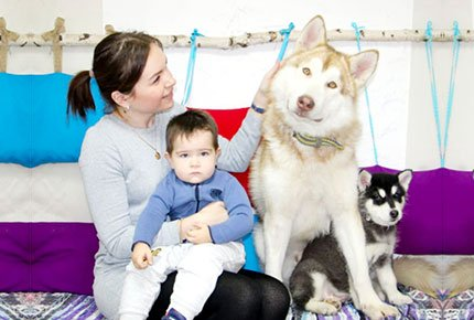 Новогодний фотосет с малышами - маламутами в студии «В гости к северным собакам» со скидкой 55%