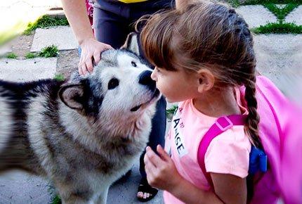 Индивидуальная экскурсия «В гости  к северным собакам» с чаепитием в деревенском доме со скидкой 50%