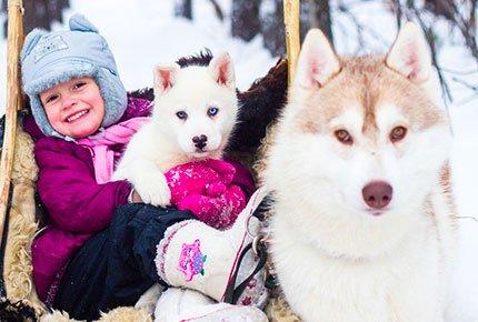 24 февраля экскурсия «Зимняя сказка с хаски» с катанием, фотосессией со скидкой 50% в питомнике «Сибериан Соул»