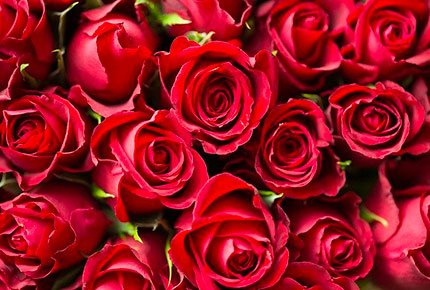 Букеты из роз или хризантем со скидкой 50% от салона «Долина роз»