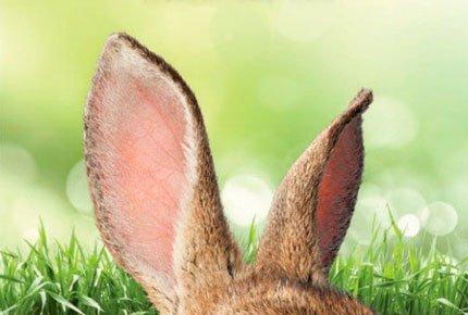 Два билета на фильм «Кролик Питер» в кинотеатре Fакел со скидкой 50%
