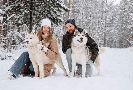 Катание на собачьих упряжках и снегоходах + фотосессия со скидкой 50% от питомника «Сибериан Соул»