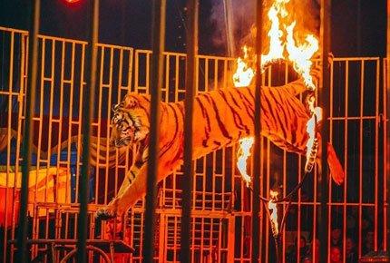 Цирковые представления с 17 по 27 мая. Два билета со скидкой 50%