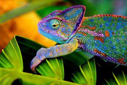 Посетите выставку экзотических животных «Тропики» со скидкой 50%