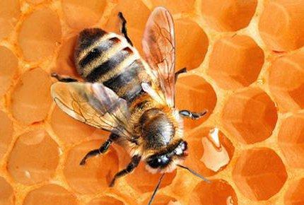 Две процедуры апитерапии со скидкой 78% в клинике восстановительной медицины и реабилитации «Здоровье Пчелы»