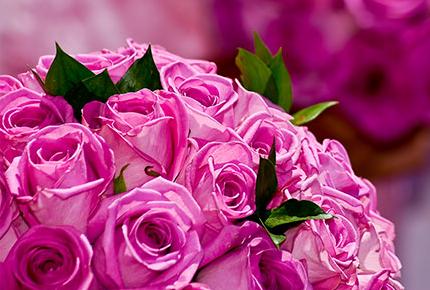 Огромный выбор роз, тюльпанов и мягких игрушек со скидкой до 80% от цветочного салона Орхидея