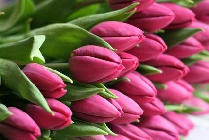 Свежие тюльпаны, хризантемы, розы со скидкой 50% от Дома цветочной моды