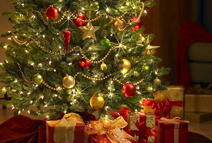 Новогодние живые елки и пихты с доставкой на дом со скидкой 50%. Заплати 700 рублей вместо 1400