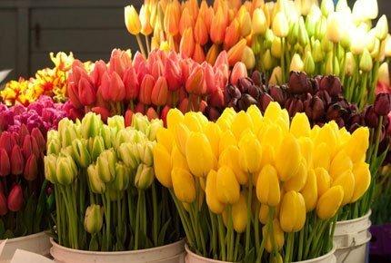 Тюльпаны и ирисы со скидкой 50% от салона «Живые цветы»
