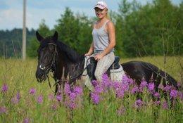 Прогулки на лошадях по Сосновому бору со скидкой 50%. Заплати 300 рублей вместо 600