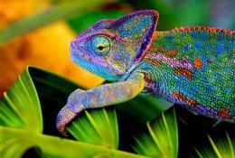 Посетите выставку экзотических животных «Тропики» со скидкой 50%. Заплати 135 рублей за двоих вместо 270